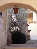 Миндаль в монастыре