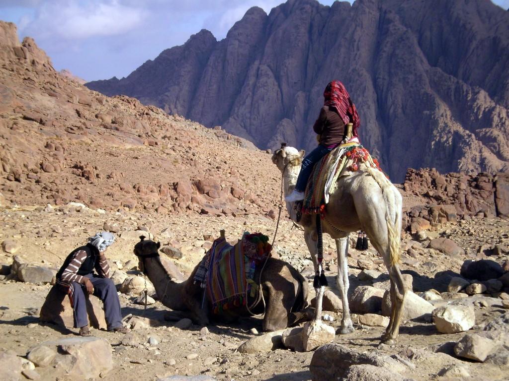 данном фото племени бедуины прогулке стало